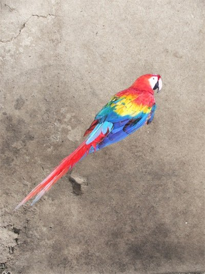 Masked parrot on grunge paper texture