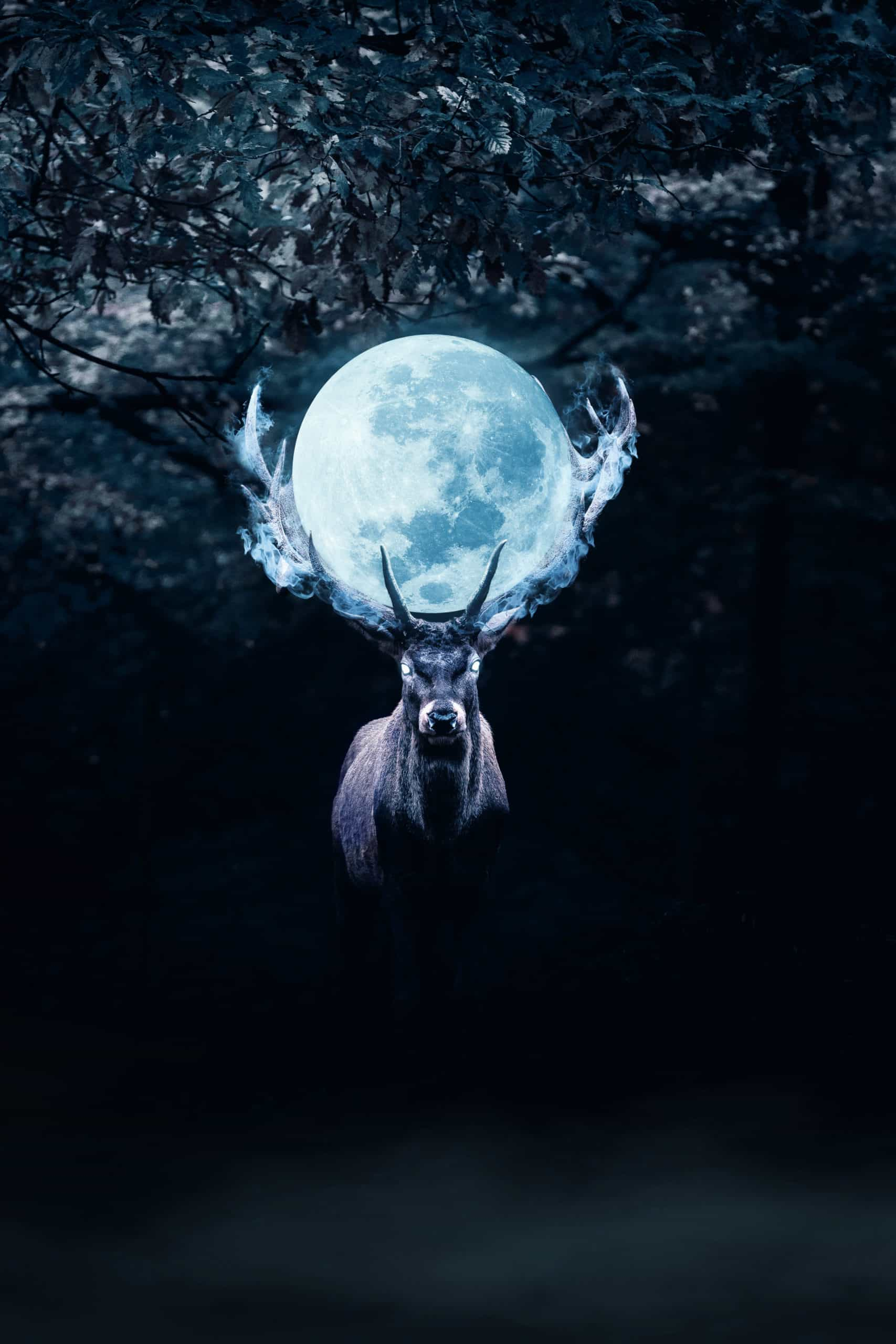 Mysterious Deer in Night Photoshop Manipulation