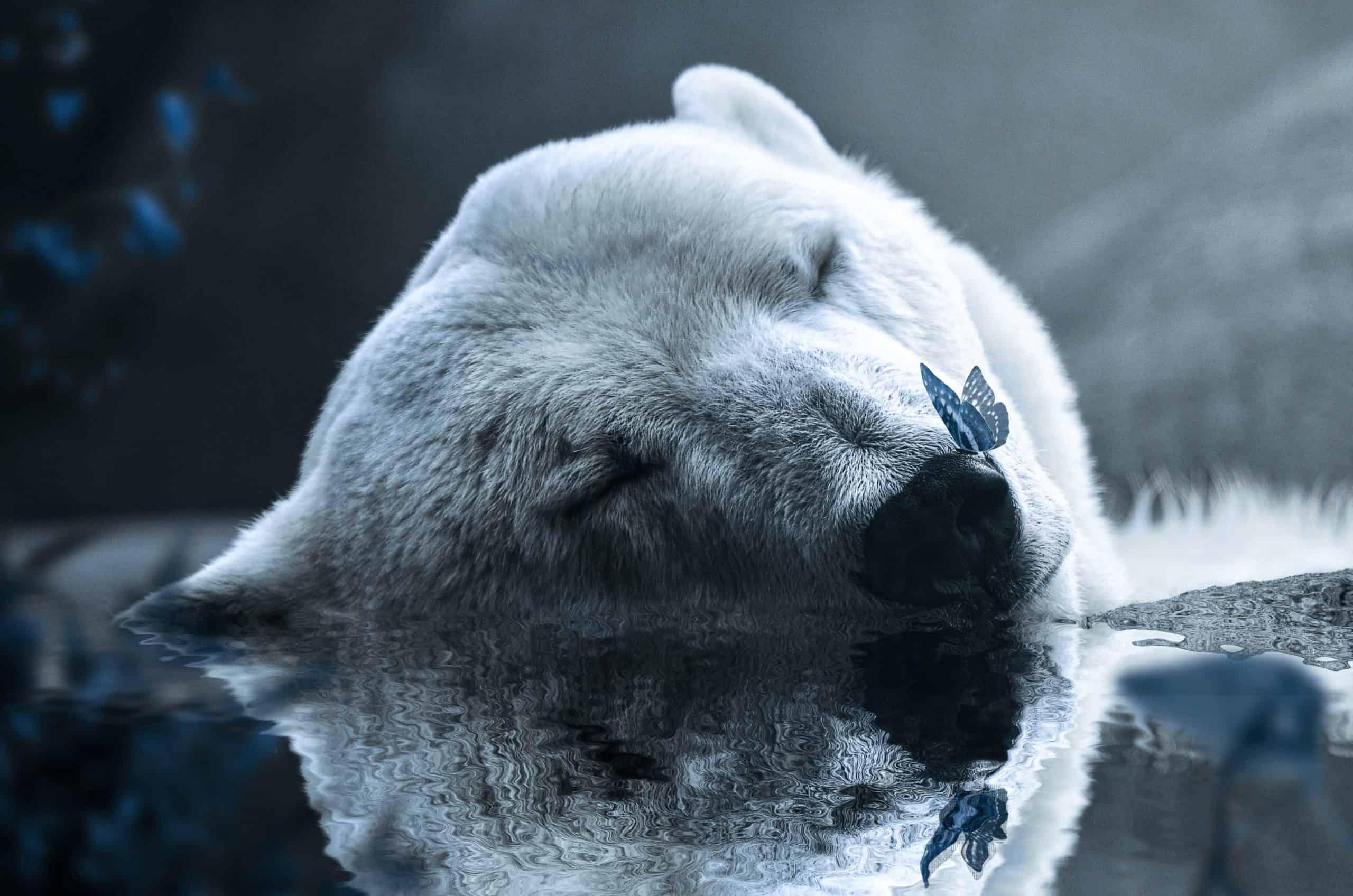 Create a Photo Manipulation of a Polar Bear