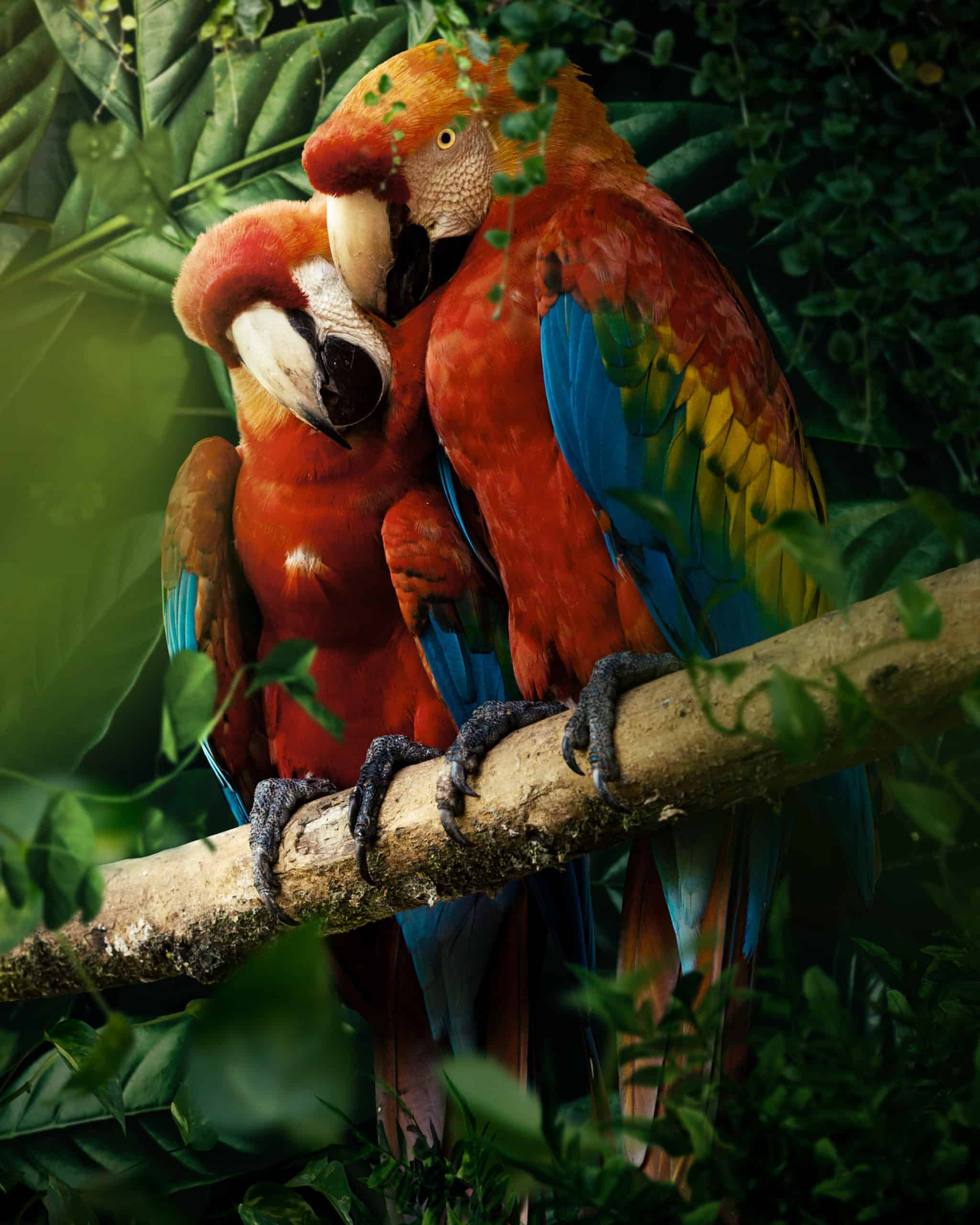 Create a nature scene of Parrots Photo Manipulation Tutorial