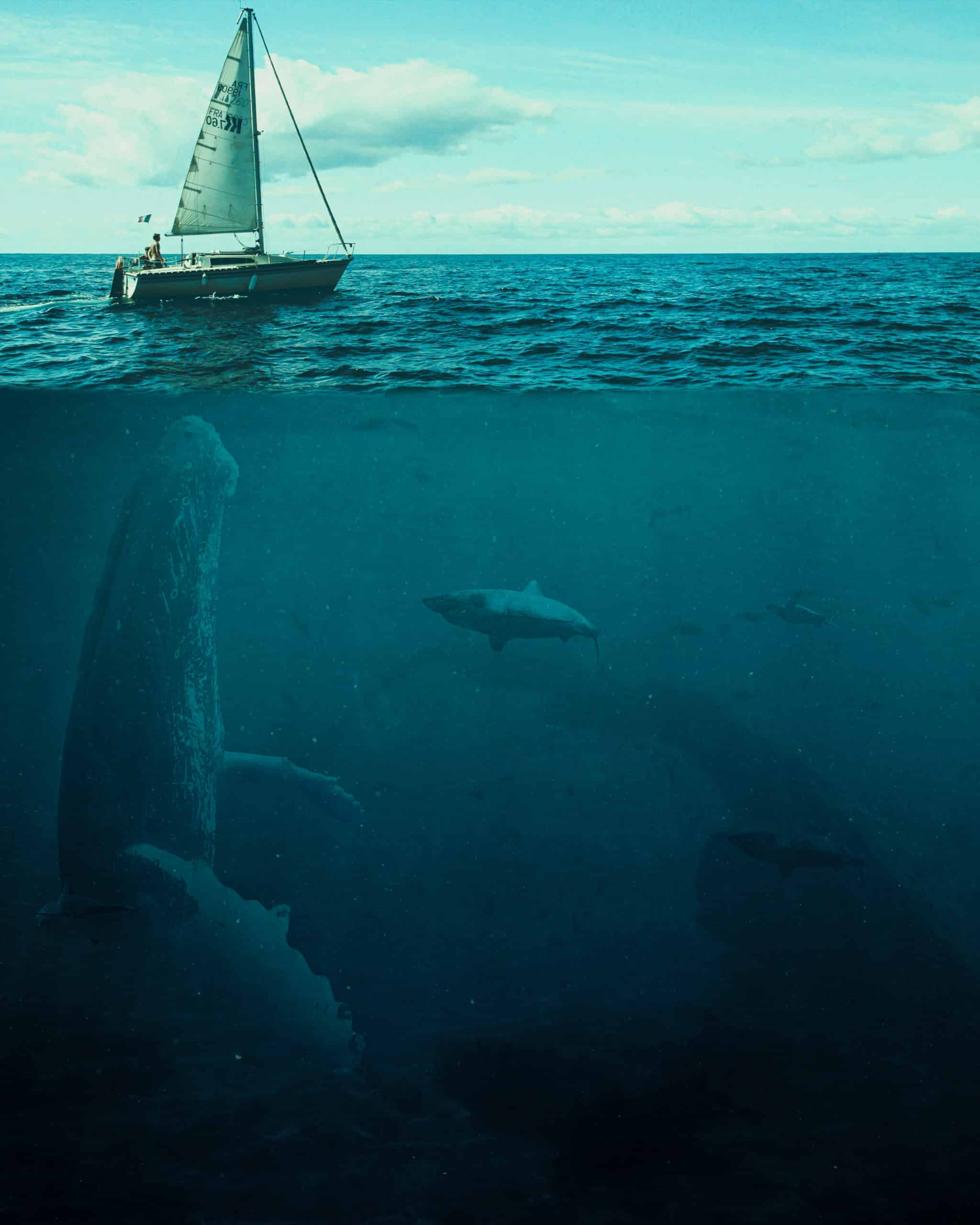 The Big Whale Photoshop Tutorial